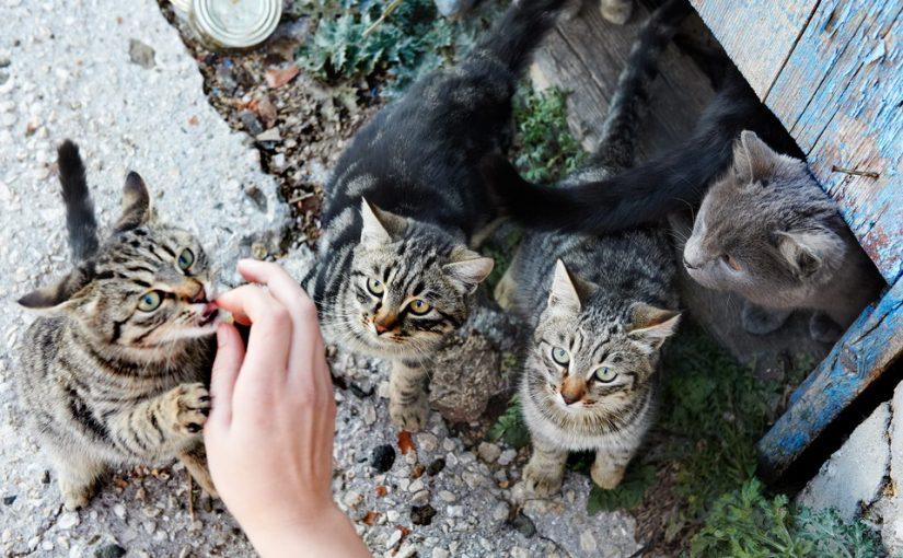 Жизнь превратилась в ад, семья рушится. Жена-кошатница принесла в дом седьмую кошку